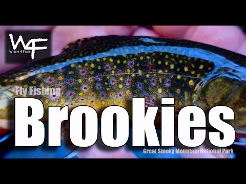 """W4F - Fly Fishing Tennessee """"Brookies"""" Great Smoky Mountain National Park"""