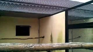Птица-носорог