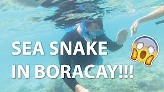 SEA SNAKE in Boracay Philippines!