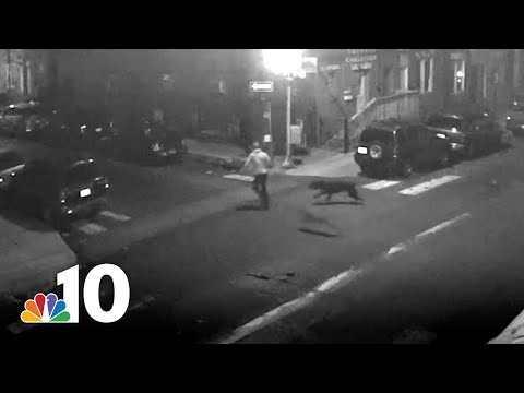 Cops Shoot Dogs Mauling Man in North Philly Street | NBC10 Philadelphia