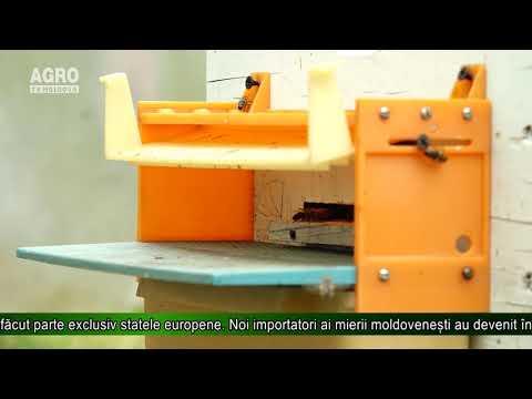Mierea moldovenească – competitivă la export