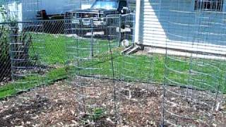 Zone 5 Vegetable Garden (part 7)