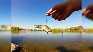 Ловля щуки на живца. Отчет с рыбалки