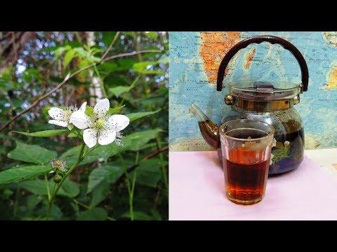 Ежевика. Чай 🌿 здоровья и долголетия ☕ (longevity Tea).