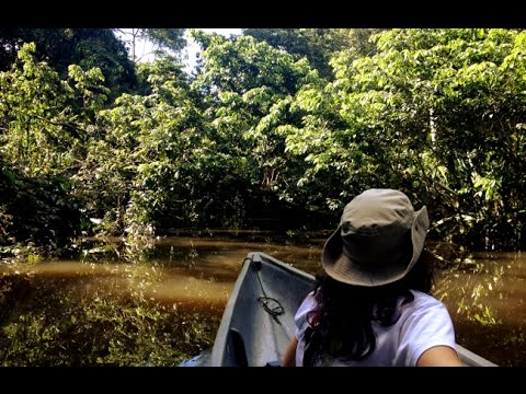 What's it like hiking in the Amazon jungle?