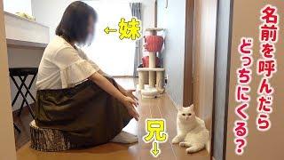 兄と妹どっちが好き?飼い猫を呼んで確かめてみた!