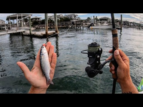 Fishing Live Mullet On Inshore Structure (Quality Over Quantity)