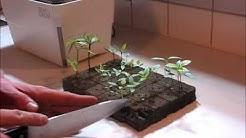 Zengrow hydroponic indoor garden/ propagator