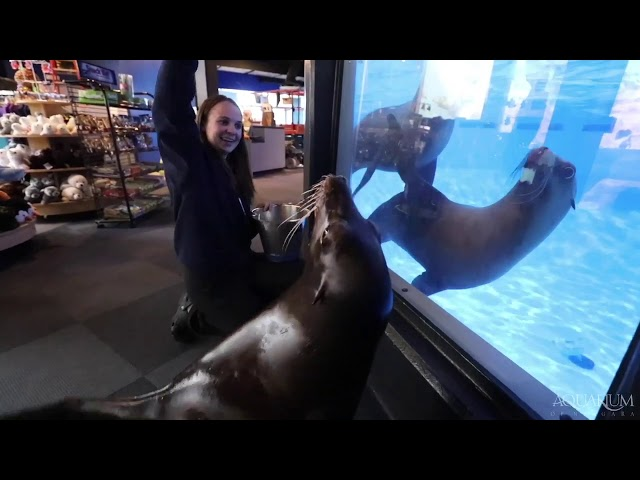 Penguins meet sea lions at Aquarium of Niagara