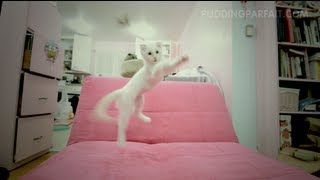 White Scottish Fold Kitten Parfait jumps for toy Thumbnail