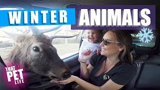These Animals Have No Shame   Funny Animals Videos