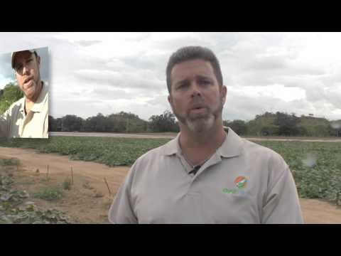 GFE Produce going organic - Sept Havest 2015