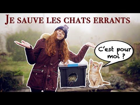 ABRIS Pour CHATS ERRANTS