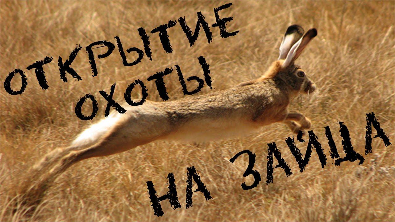 Охота на зайца 2015.Открытие охоты на зайца 2015.Коллективная охота.