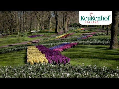 Enjoy the park! - Keukenhof virtually open