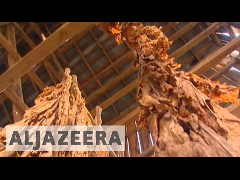 Kentucky puffs on as tobacco farming dwindles