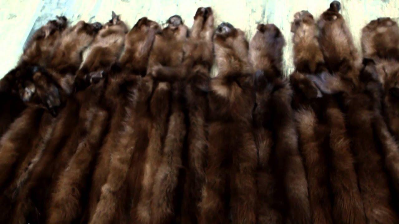 27 ноя 2014. Между тем, всё большую популярность в челябинские набирают эко-шубы, сшитые из искусственного меха, рассказала корреспонденту «аиф челябинск» зоозащитница мария усенко. Вместо шкурок невинных животных для таких шуб используют гипоаллергенное пальмовое волокно и.