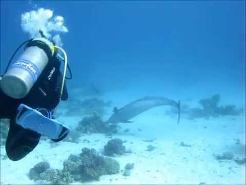 Film: Diving in Egypt 2015
