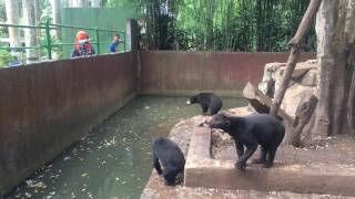 Are these bears still hungry in the Bandung (the horrific) Zoo?