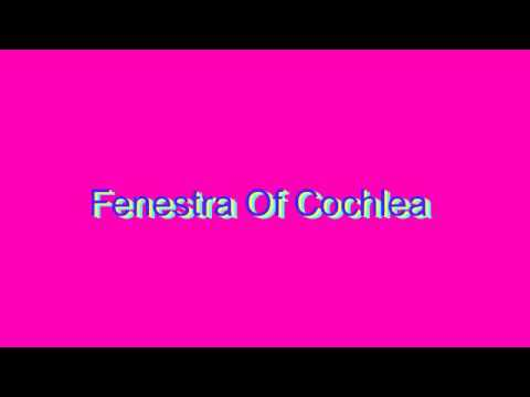 How to Pronounce Fenestra Of Cochlea