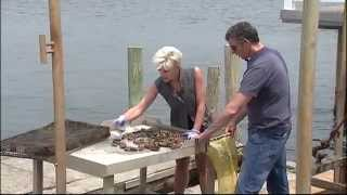 A Look At A Long Island Oyster Company