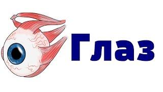 Видео-урок по анатомии. Глаз(http://vk.com/uaanotomiya., 2015-03-28T20:52:47.000Z)