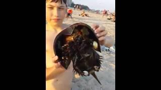 Прикольное млекопитающее на пляже в Калифорнии.