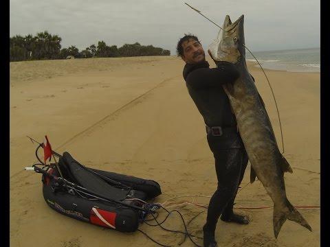 Spearfishing  87,52 Lb ( 39,7 Kg)  great barracuda in shippwreck