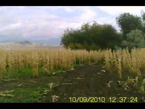 Cache Valley MX Grand Prix Corn Maze.wmv