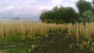 Cache Valley MX Grand Prix Corn Maze.wmv