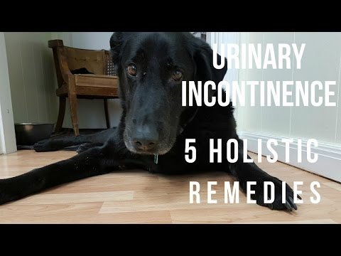Urinary Incontinence in Dogs: 5 Holistic Remedies