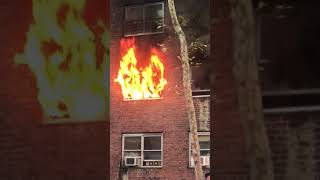 Cat Jumps Towards Rescuers Arms From Flaming Second Story Window in Harlem