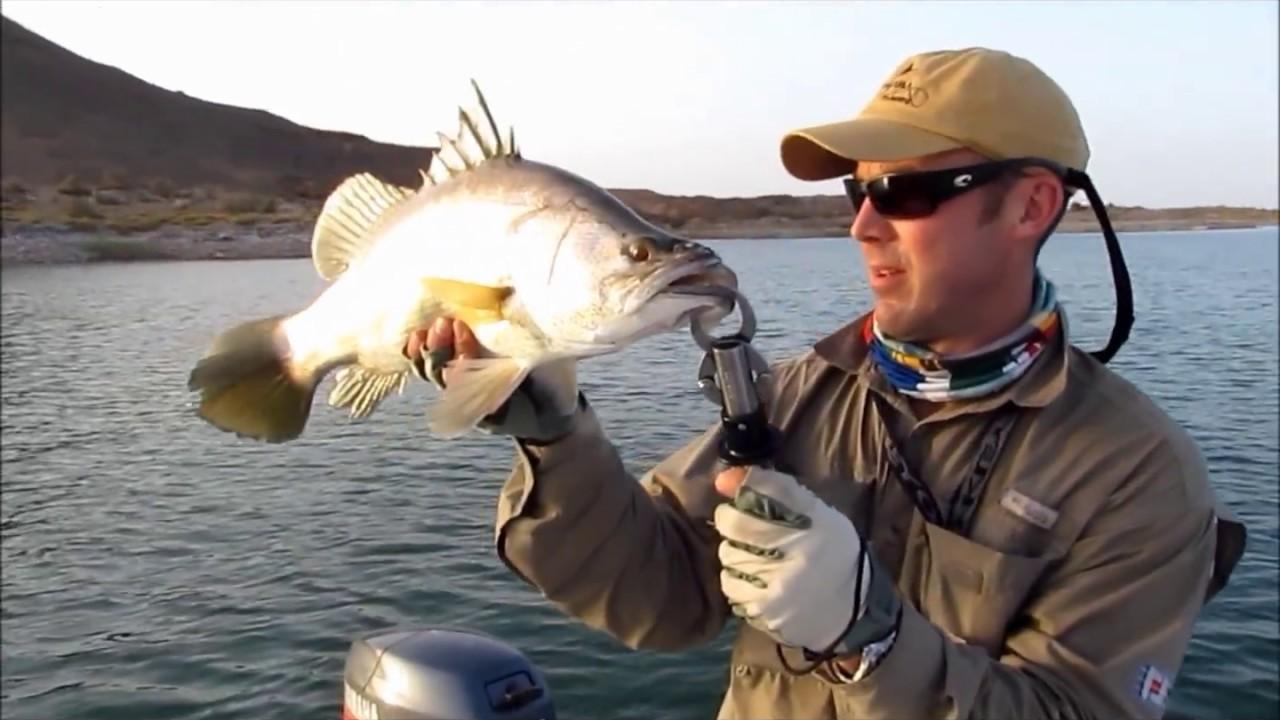 Egypt flyfishing lake nasser youtube for Lake of egypt fishing report
