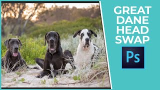 Pet Photography Editing Video Tutorial - Great Dane Head Swap