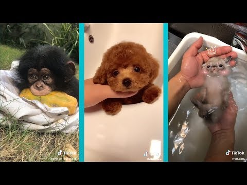 The Cutest Animals on Tik Tok! Amazing Pet Tricks + Exotic Creatures