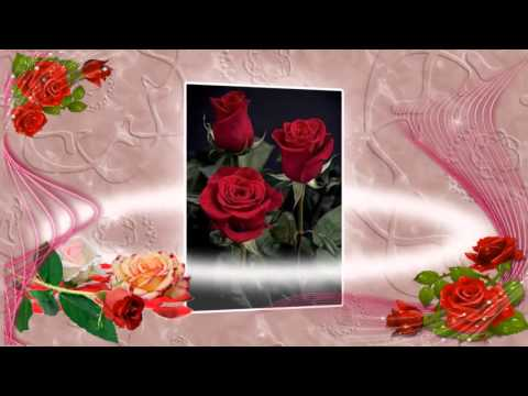 Pitomnik   Dolina roz
