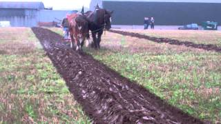 Clydesdale Horse Ploughing Scotland