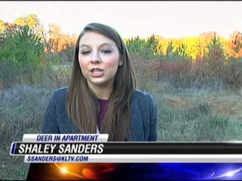 EXCLUSIVE  Deer breaks into apartment - KLTV 7 News Tyler, Longview, Jacksonvill