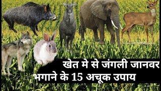 खेत से जंगली जानवर भगाने 15 तरीके , 2019 के सबसे कारगर नुस्खे सुअर नीलगाय आदि को भगाने के