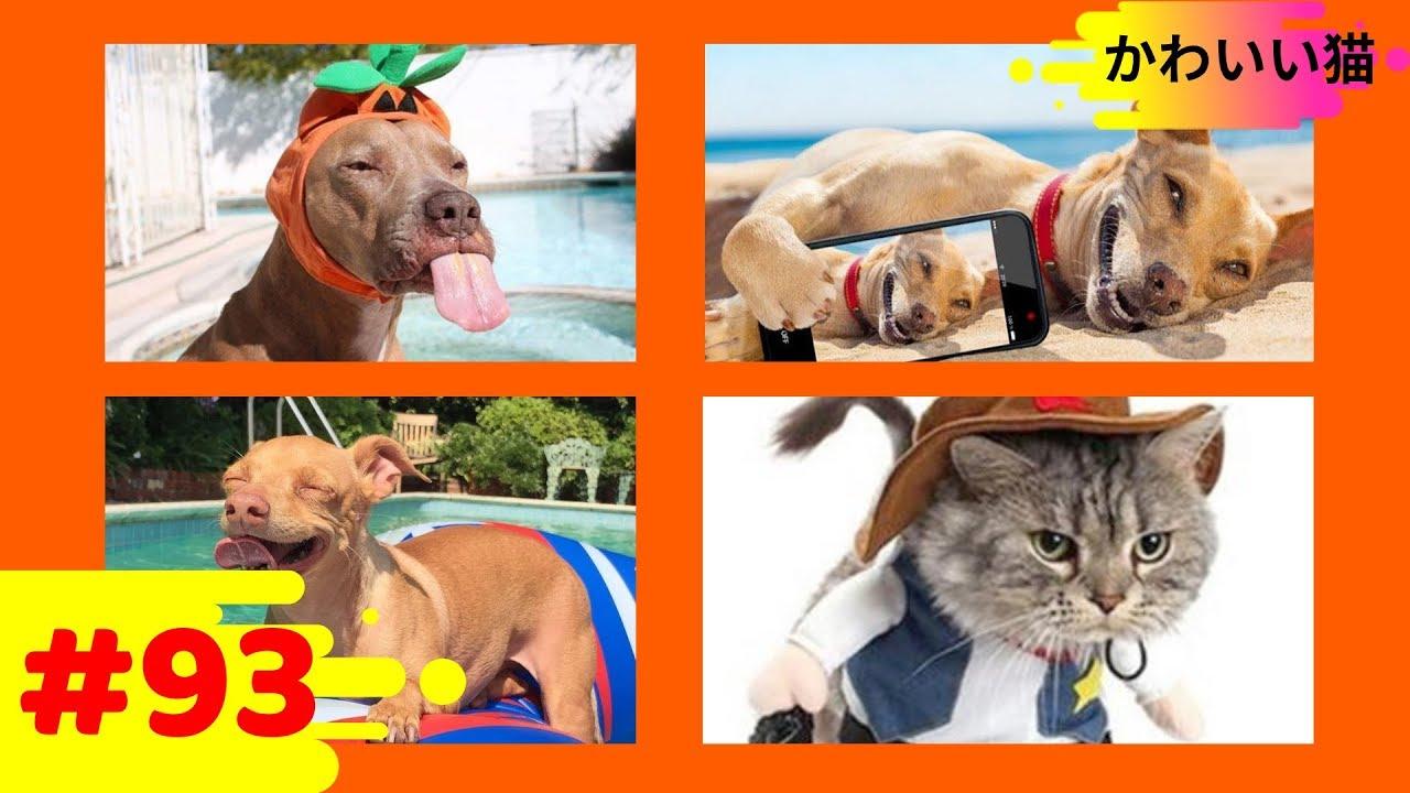 【面白い動画】 かわいい猫   かわいい犬   最も面白いペットの動画 93