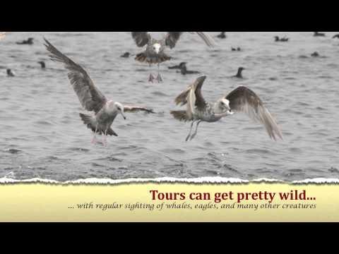 nakwakto-rapids-tours-|-ecotourism-bc