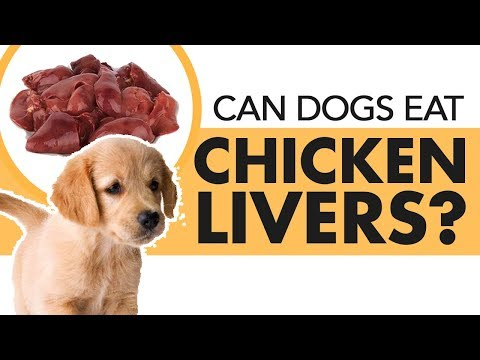Can Dogs Eat Chicken Livers