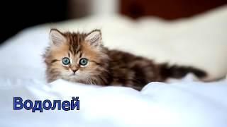 Какой ты котенок по знаку зодиака