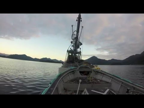 Salmon Seining, Prince Williams Sound, AK 2016