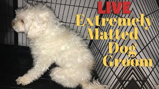 Dog Extremely Matted Live Groom