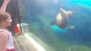 fok balığına dans ettiren minik kız