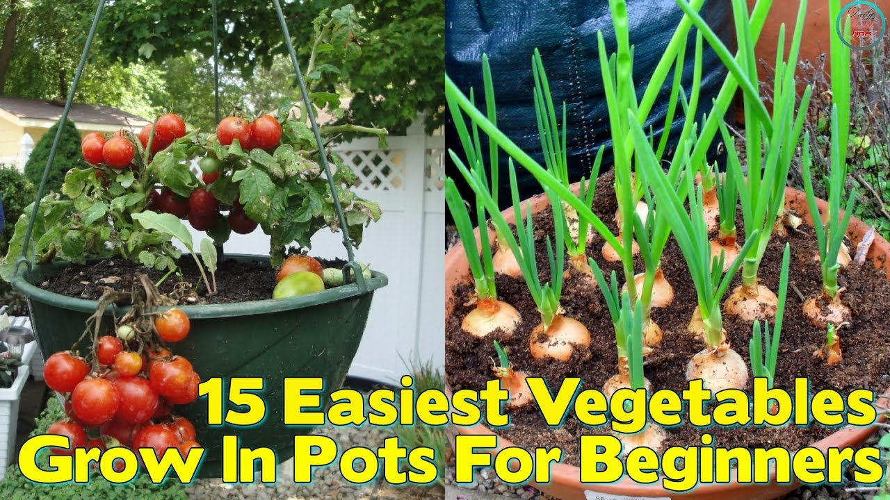 Superbe 15 Easiest Vegetables To Grow In Pots For Beginners