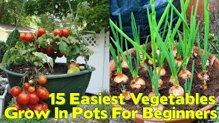 15 Easiest Vegetables To Grow In Pots For Beginners 1: Beets: This kind of variety grows well in small spaces – however, if you