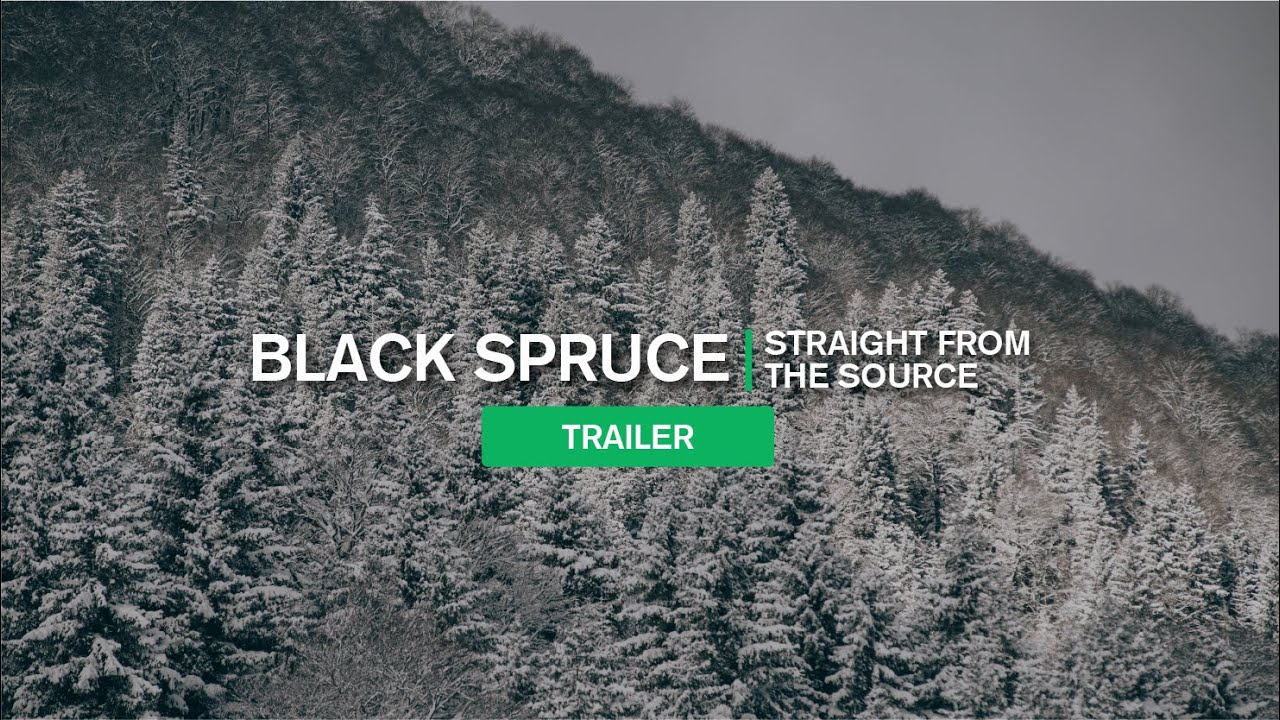 Straight from the Source: Black Spruce Trailer