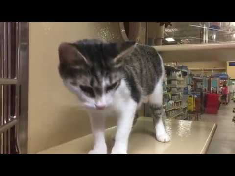 Mama Cat Scope and Her Baby Micro Get Adopted Together!!!